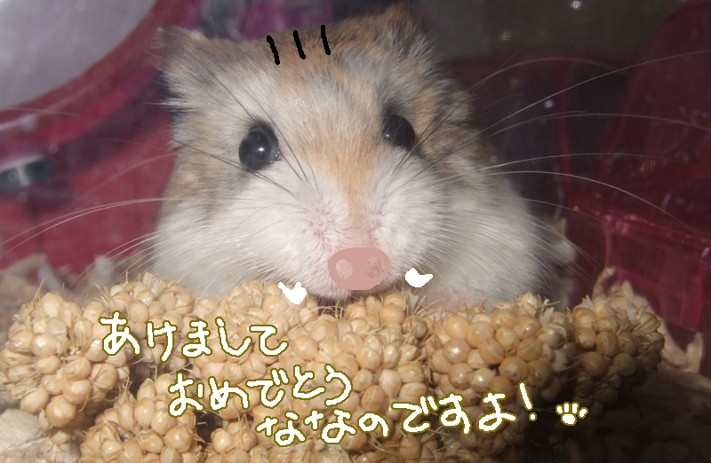 Akemiro